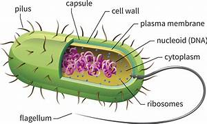 What Is A Single Celled Organism Called Answers Com  U0026gt  Onettechnologiesindia Com
