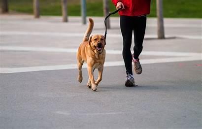 Dog Running Walking Dogs Jogging Breeds Owner