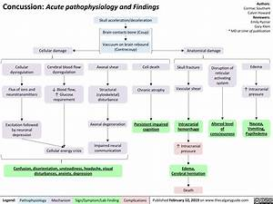 Concussion  Acute Pathophysiology And Findings