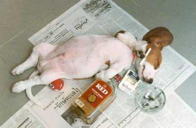 drunk dog passed  comments myspace drunk dog passed  graphics pimp  profile