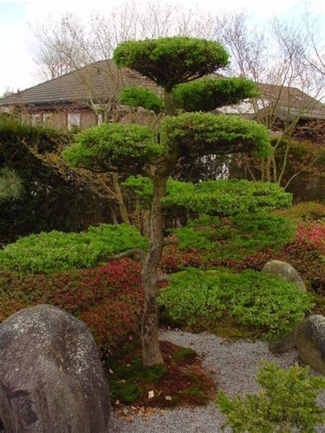Bäume Für Japanischen Garten by Japanischer Garten B 228 Ume