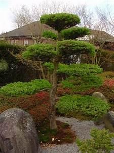 Japanischer garten baume for Garten planen mit bonsai lebensbaum kaufen
