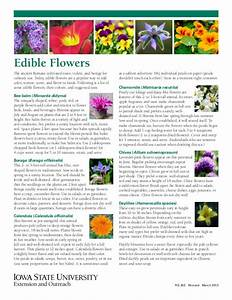 Edible Flowers  A Guide