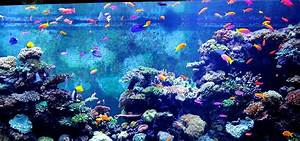Aquarium Fische Süßwasser Liste : fischsterben so schlimm sind aquarien wirklich ~ Watch28wear.com Haus und Dekorationen