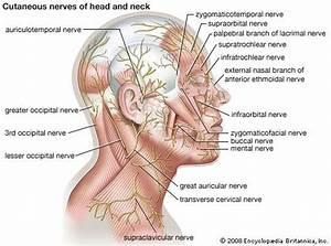 Lymph Node Anatomy Diagram