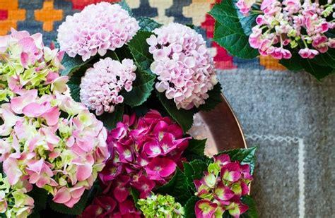 Gruenpflanzen Zimmerhortensien Vertreiben Den Winter Blues by Fr 252 Hlingshafte Gestaltungsvarianten Mit Der