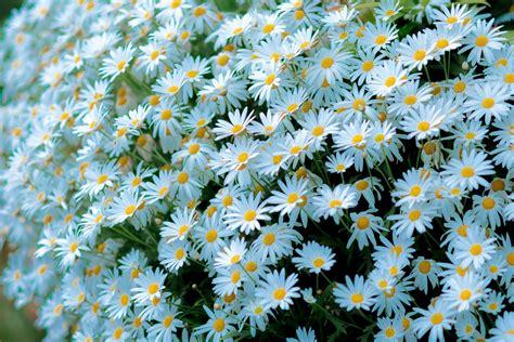 วอลเปเปอร์ : ธรรมชาติ, เบ่งบาน, ปลูก, กลีบดอก, ทุ่งหญ้า ...