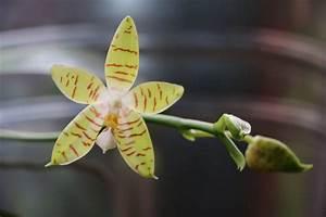 Orchideen Oase Berlin : colomi substrat aktion in der orchideen oase berlin ~ A.2002-acura-tl-radio.info Haus und Dekorationen