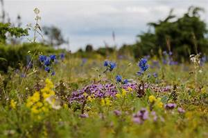 Long summer weekend nature photography tour- 4 days in Estonia