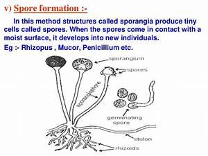 How Do Organisms Reproduce Ppt