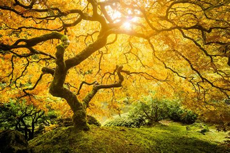 Connecting to the Tree of Life - Auburn Seminary