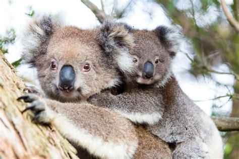animals  australia australian animals
