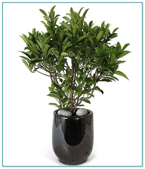 cheap indoor plants house plants that like direct sunlight