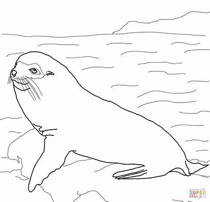 Galapagos Seal Coloring Pages Fur Leopard Sheets