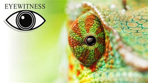 EYEWITNESS | Sight | S312 - YouTube