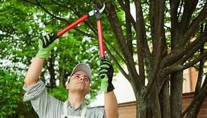 Bäume Schneiden Wann : jetzt im garten b ume und str ucher schneiden ~ Lizthompson.info Haus und Dekorationen
