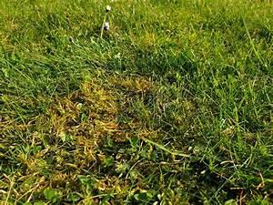 Moos Im Rasen Beseitigen : moos und unkraut im rasen dauerhaft entfernen garta ~ A.2002-acura-tl-radio.info Haus und Dekorationen