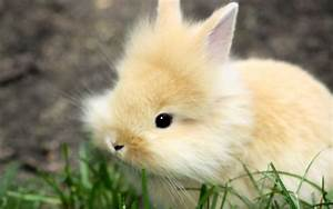 Baby Bunny Wallpapers - Wallpaper Cave