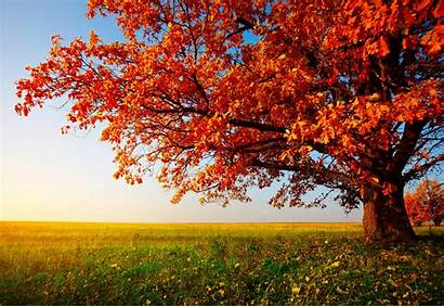 Desktop Trees Fall Autumn Wallpapersafari