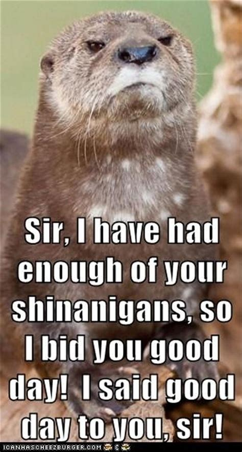 Good Day Sir Meme - good day sir funny animal pictures dump a day