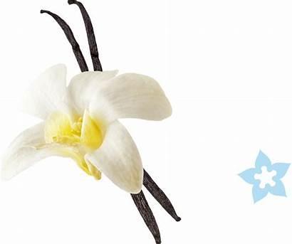 Vanilla Bean Cream Chocolate Mint Chip Mochi