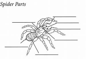 Large Quiz Like Printout On Invertebrates  Great Resource