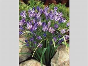Bulbes D été : bulbes d t l 39 atelier des fleurs ~ Melissatoandfro.com Idées de Décoration