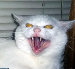 evil cats evil cat