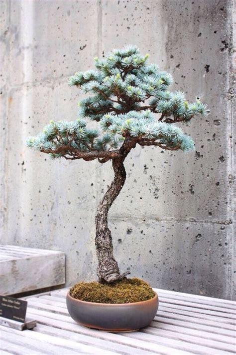 Pflege Bonsai by Den Bonsai Baum Richtig Und Praktisch Pflegen Tipps
