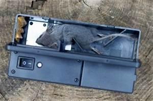 Piege à Rat Efficace : solutions pratiques pour se d barrasser des souris ~ Dailycaller-alerts.com Idées de Décoration