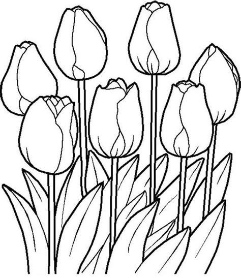 gambar mewarnai bunga tulip pintar mewarnai