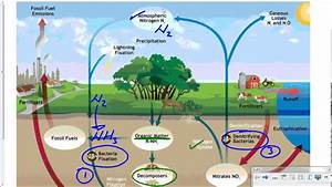 Mr  Walker U0026 39 S Biology 20 Nitrogen Cycle Lesson