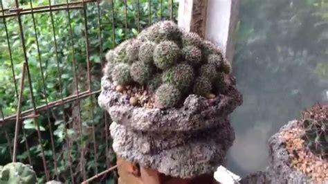 Cactus Thailand #4 - YouTube
