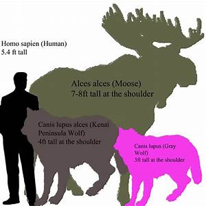Wolf Size Comparison Chart | New Style for 2016-2017