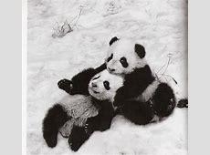 Pandas Photo by jenna_na Photobucket