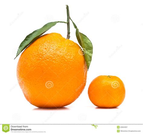 Big And Small Orange Stock Image Image Of Leaf, Shape