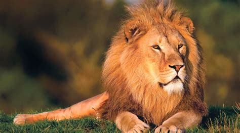 Most Beautiful Wallpapers Of Animals - most beautiful wallpapers of animals wallpapersafari