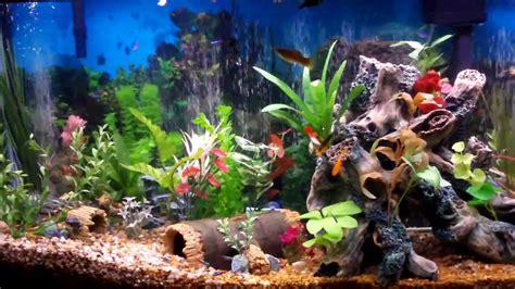 fish tank aquarium   created beautiful youtube