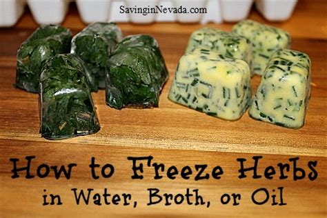 can you freeze basil how to freeze herbs