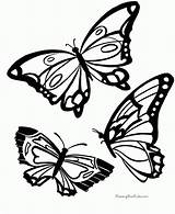 Coloring Butterfly Printable Pages Print sketch template