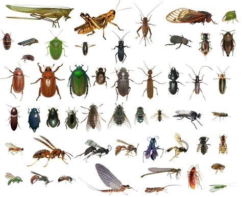 College Level Entomology Insect Collection- Identified