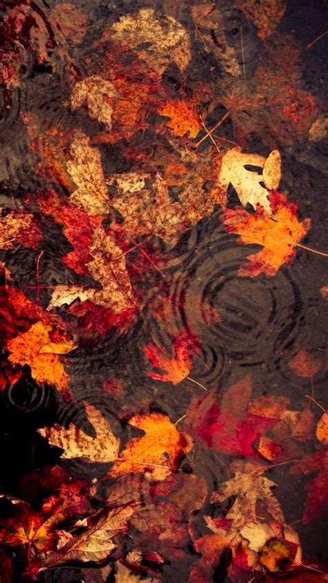 Autumn Wallpapers Cozy by Leaves Floating On The Lake Iphone 5s Wallpaper Fall