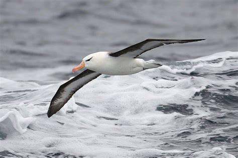 Kitchen Ideas For Small Spaces - pelagic definition pelagic birds