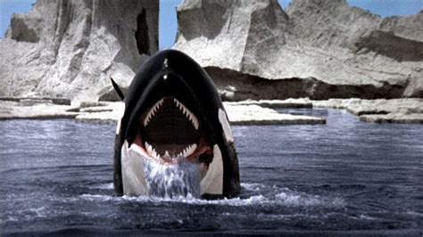 orca  killer whale  backdrops