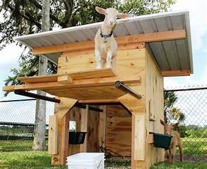 Nigerian dwarf goats in Southwest Florida | Pick Me Yard