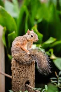 Squirrel Eating a Cheeseburger