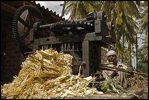 Verarbeitung Von Gipsplatten : verarbeitung von zuckerrohr ii foto bild asia india ~ Lizthompson.info Haus und Dekorationen