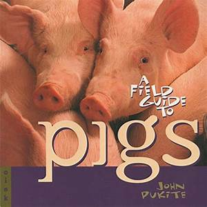 Pig Breeds  A Handy Guide To Choosing The Best
