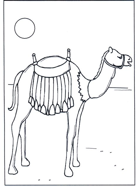 kamele  der sonne malvorlagen zoo