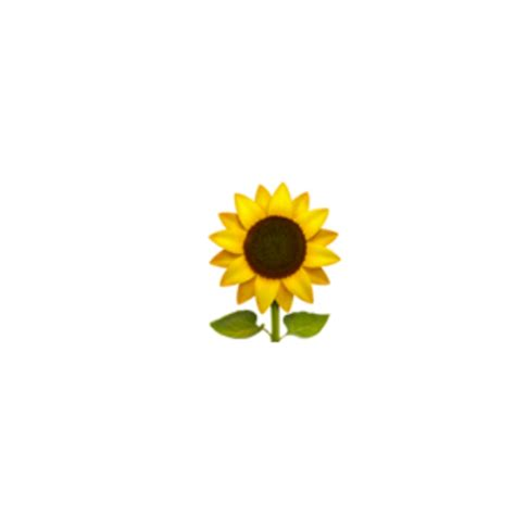 sunflower emoji iphone emojis picsart